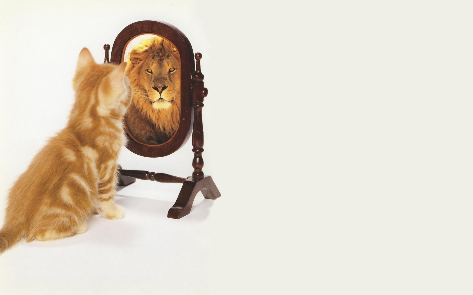 cat looking in mirror sees lion. ethics with a bite: fluffy kitten or lion? - the compliance strategists blog cat looking in mirror sees lion e